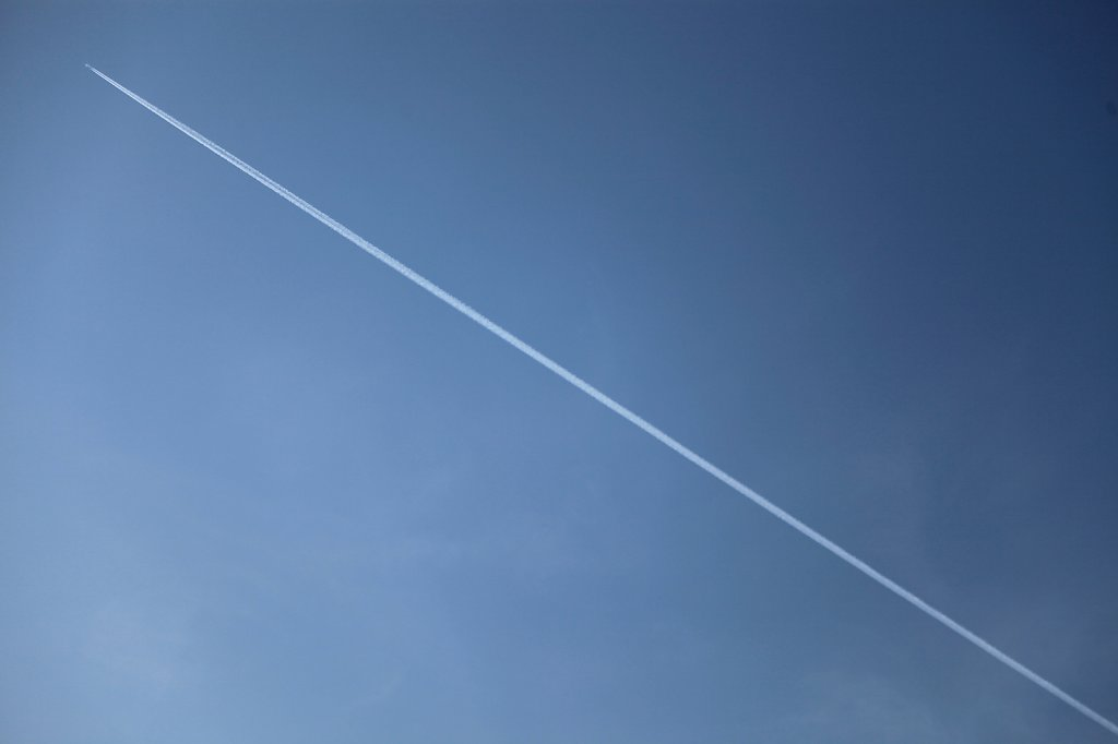 Flystriper